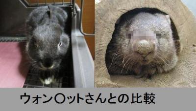 hikaku_convert_20130613012126.jpg