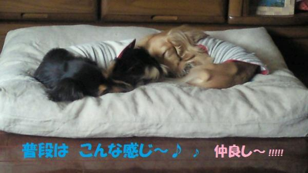 りんゆめ ベッド
