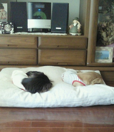 りんゆめ ベッド2