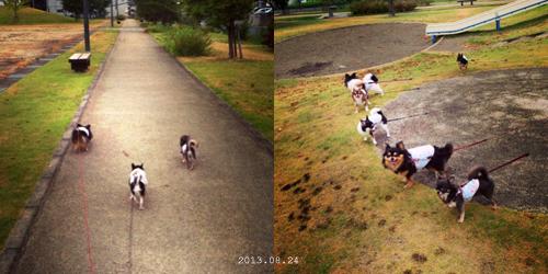 0824お散歩