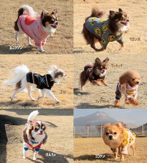 dogrun010202.jpg
