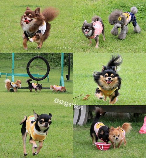 dogrun1_20130916234117169.jpg
