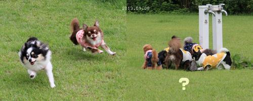 dogrun_201309162341060b3.jpg