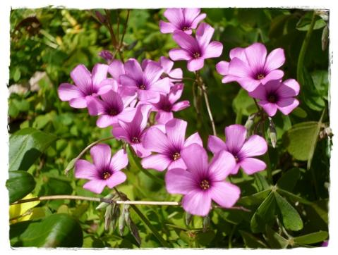 お花の季節③