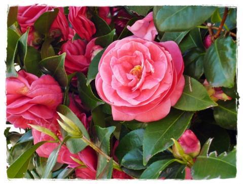 お花の季節⑤