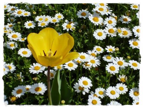 お花の季節⑥
