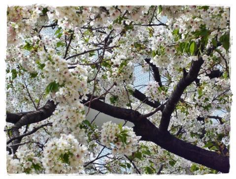 お花の季節⑧