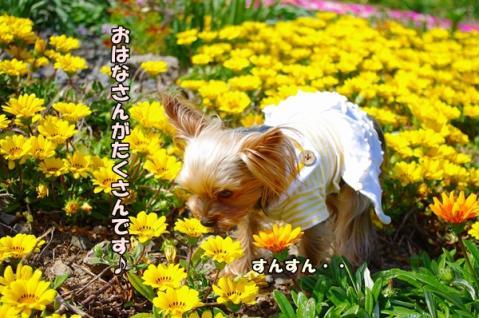 五島の春①