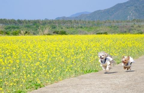 五島の春④