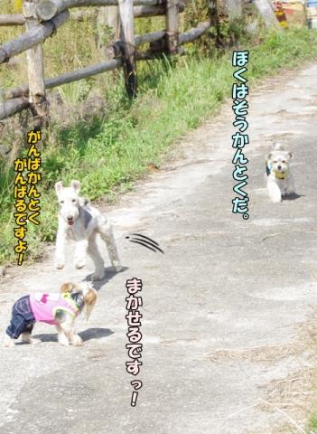 稲刈り2013⑤