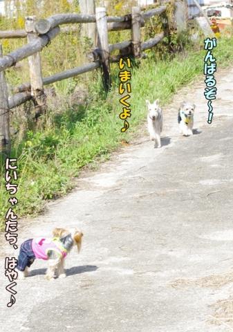 稲刈り2013④