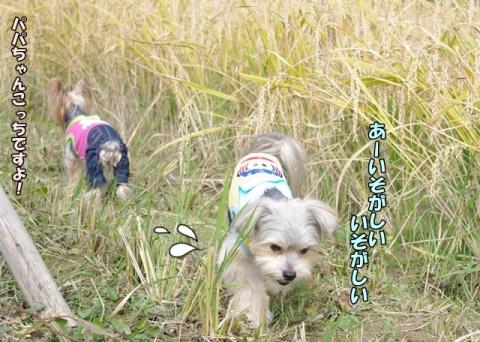 稲刈り2013⑧