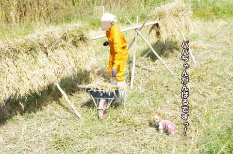 稲刈り2013⑯