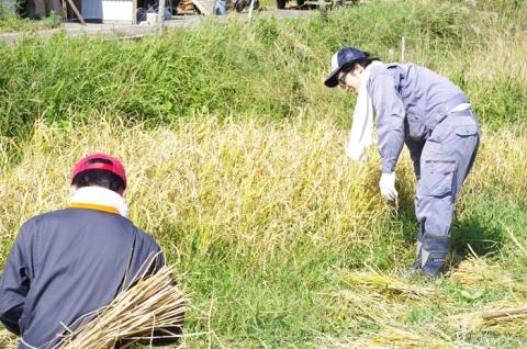 稲刈り2013⑰