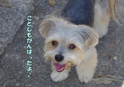 稲刈り201322