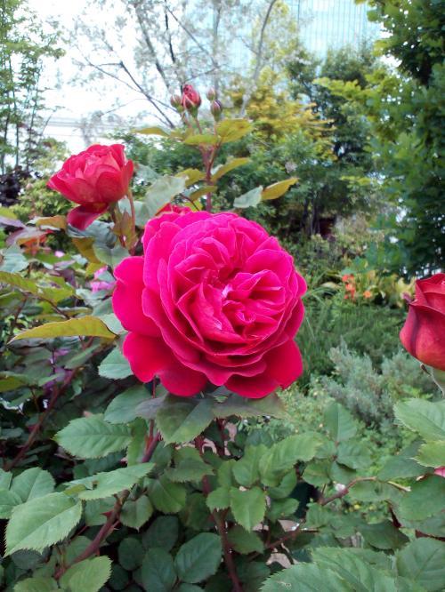 L'Ami des Jardins