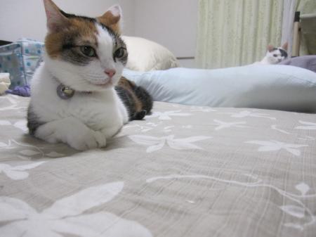 このベッドは私のもの!