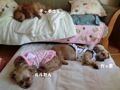 のんびりお昼寝。気持ちよさそう