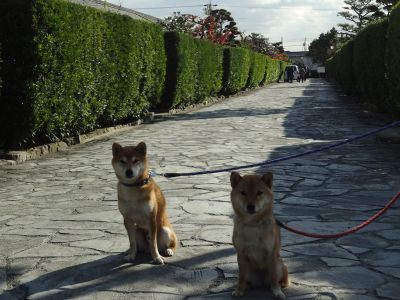 松阪城10