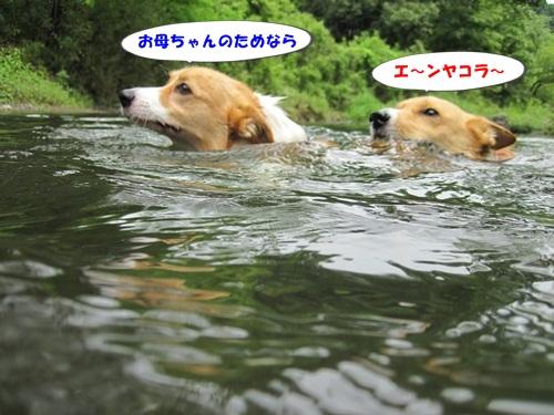 IMG_0684_20130726212842.jpg
