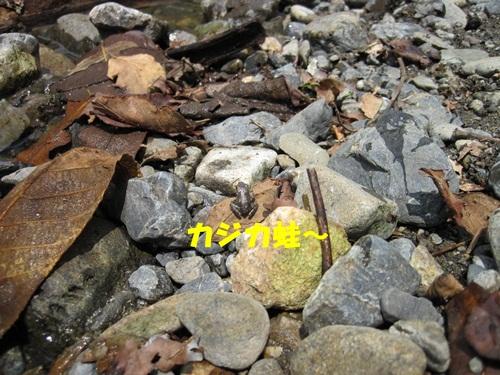 IMG_1456_2013081710023971f.jpg