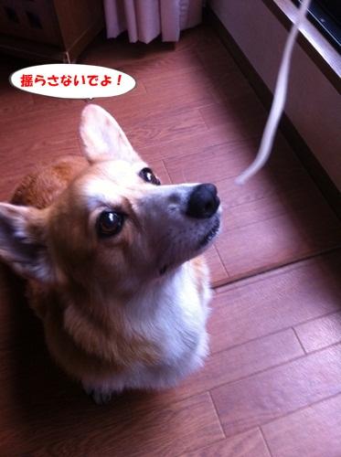 ryura1.jpg