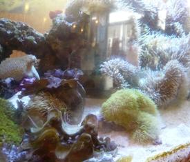 海神丸:店内水槽