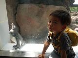130616_水族館ペンギン (2)