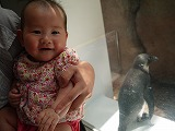 130616_水族館ペンギン