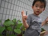 130625_保育園ナストマト (1)