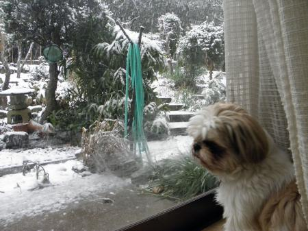 P2140221_convert_20140214092708雪の庭見る旭