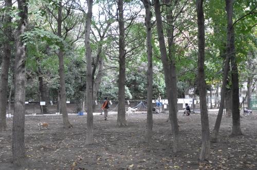 文化の日散歩4