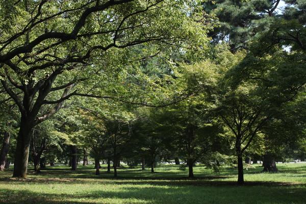 御所の木々