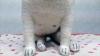 doll2 (12)