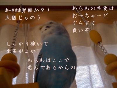 s-DSCN0851.jpg