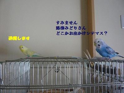 s-P1160487.jpg