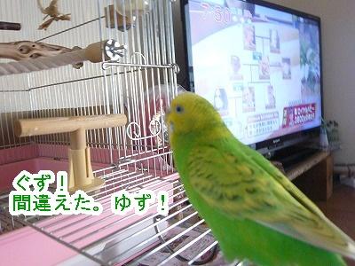 s-P1170346.jpg