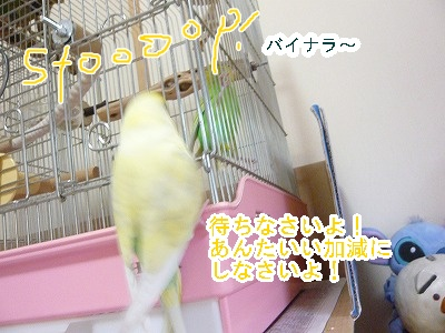 s-P1170616.jpg