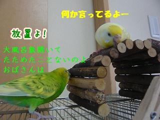 s-P1200638.jpg