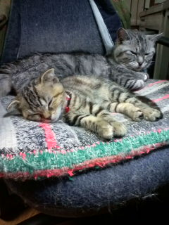 長生き「ピーコ」新人ユキとお昼寝