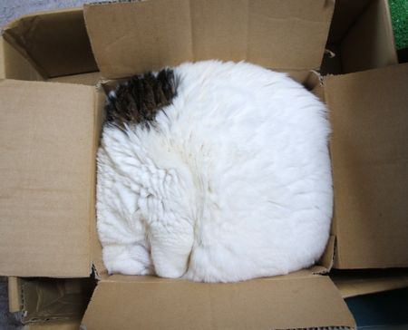 cat00412.jpg
