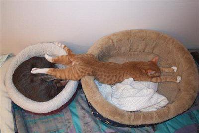 cat00558.jpg