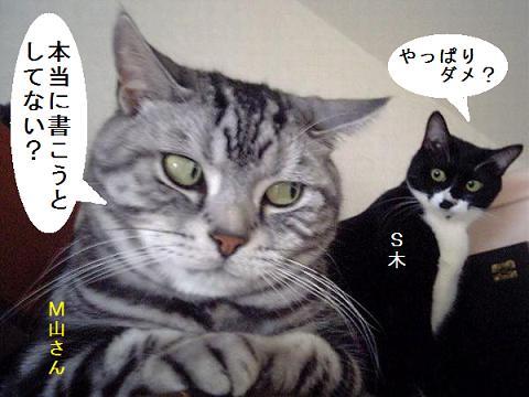 cat01099.jpg