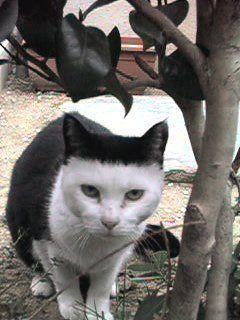 cat01454.jpg