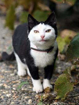 cat01666.jpg