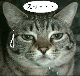 neko_03.jpg