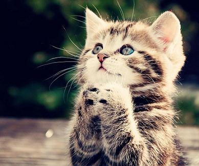 praying-kitten.jpg
