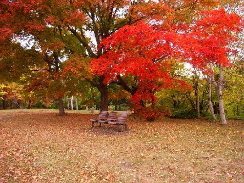 紅葉とベンチ2