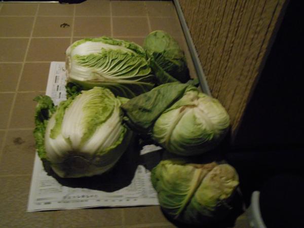 玄関前の野菜