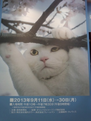 にゃんきっちゃん